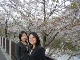 Tokyo April 2006: [April 2006] Pictures in Tokyo in April, complete with a good helping of the obligatory cherry blossom photos.